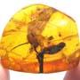 Rare Huge Unusual Flower In Dominican Amber