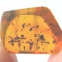Rare Two Isopods In Dominican Amber