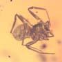 Rare Pseudoscorpion, Spider And Planthpper In Dominican Amber