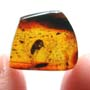 Rare Gnat Bug In Dominican Amber