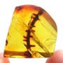 Rare Thorn In Dominican Amber