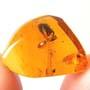 Rare Unique Bud In Dominican Amber